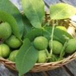Польза и вред грецких орехов китайских, пророщенных, молодых