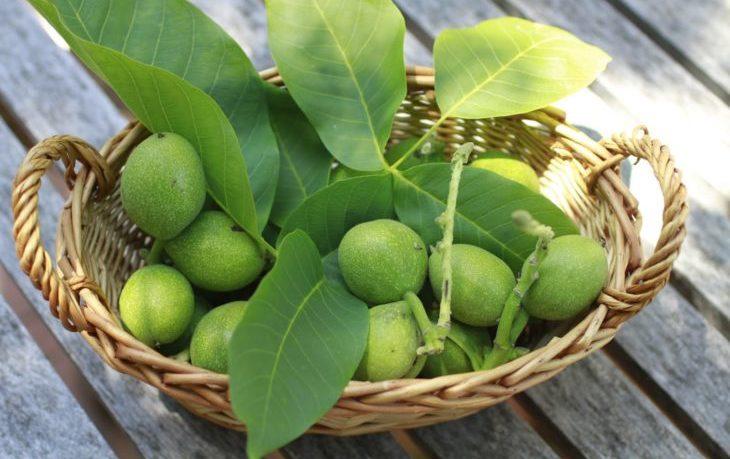 молодые грецкие орехи польза и вред