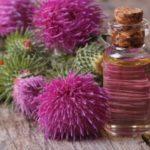 Польза и вред масла, меда, киселя из расторопши