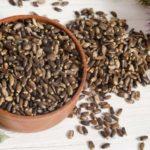 Польза и вред масла, муки, урбеча из семян расторопши
