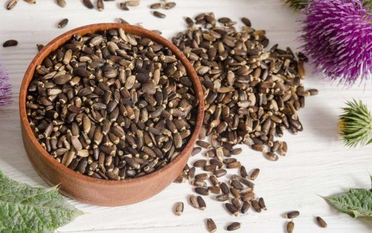 семена расторопши польза и вред