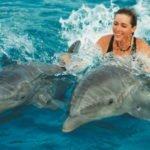 Польза и вред плавания с доской, кролем, с дельфинами