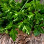 Польза и вред петрушки для здоровья организма человека