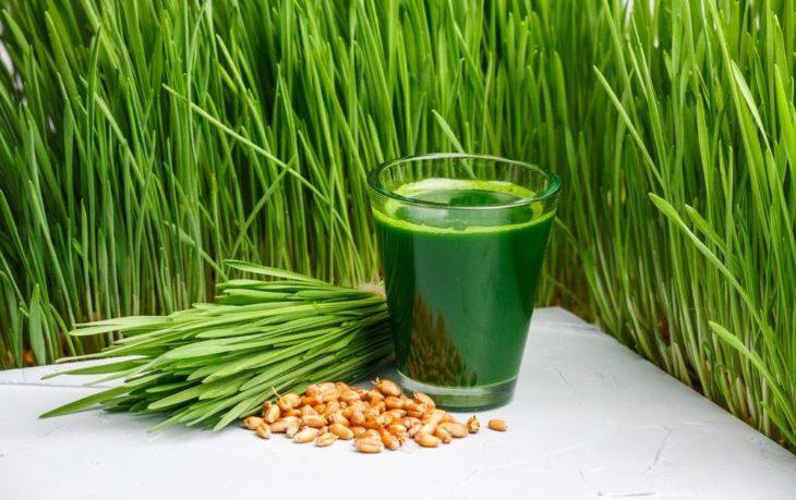 сок ростков пшеницы польза и вред