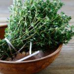 Противопоказания, польза и вред травы чабреца для печени, в варенье, настойке