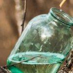 Польза и вред березового сока для желудка, при подагре, похудении
