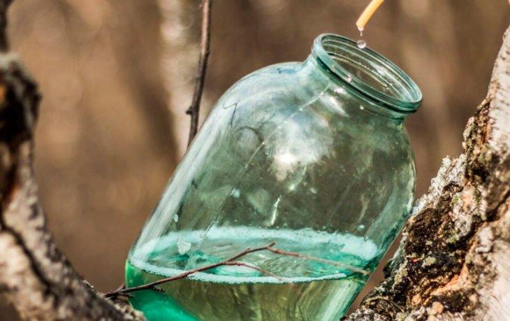 березовый сок польза для желудка