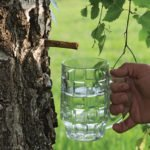 Противопоказания, польза и вред березового сока при диабете, для почек, печени