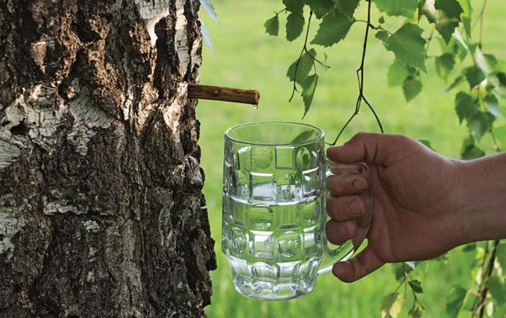 березовый сок польза для диабетиков