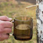 Польза и вред березового сока свежего, замороженного, с лимоном и медом