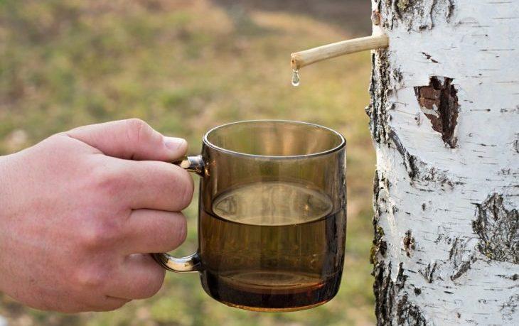 свежий березовый сок польза и вред