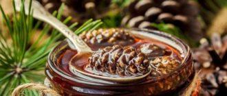 варенье из шишек сосны польза и вред