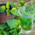Польза и вред чая из крапивы для мужчин, женщин, при похудении