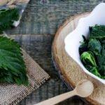 Польза и вред молодой крапивы в отваре, салате, для лица