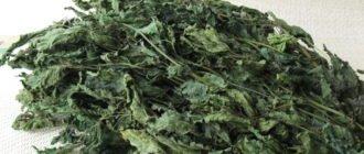 польза и вред сушеной крапивы