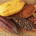 Какао бобы: польза и вред для здоровья организма