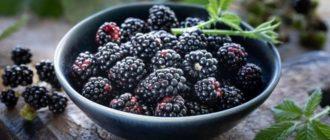 ежевика садовая польза для здоровья