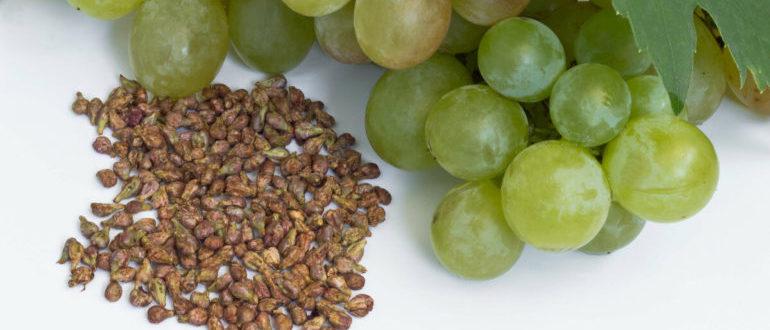 косточки винограда польза и вред