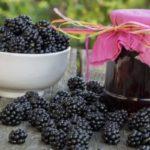 Польза и вред ягоды ежевики: чай из листьев, варенье, джем, настойка, смузи