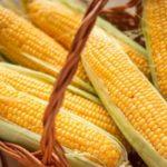 Польза и вред кукурузы: консервированная, свежая, в отваре, каше, попкорне