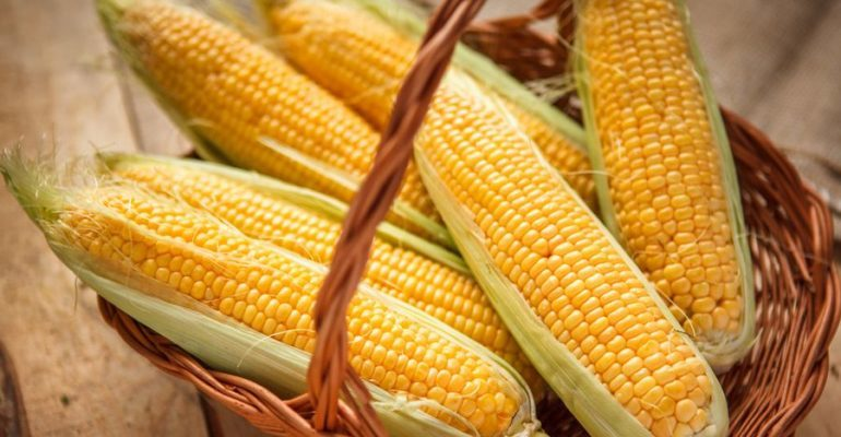 кукуруза свежая польза и вред