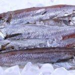 Польза и вред рыбы путассу для здоровья организма человека