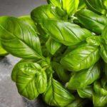 10 продуктов с высоким содержанием витамина К