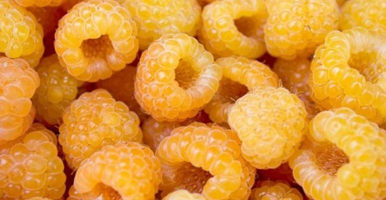 желтая малина польза и вред для здоровья