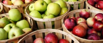 яблоки при тяжести в желудке