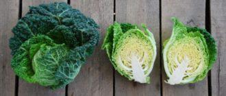 полезные свойства савойской капусты