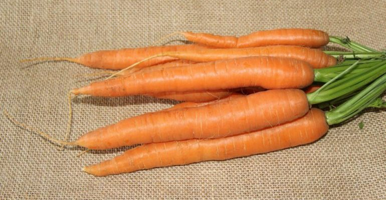 чем полезна свежая морковь