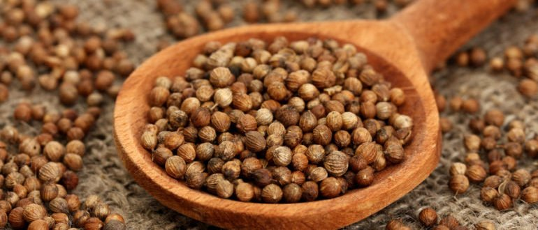 семена кориандра польза и вред